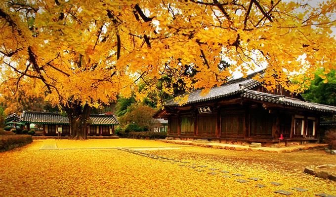 Những loại cây không thể thiếu trong bức tranh thiên nhiên của Nhật-Hàn-Đài